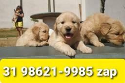 Título do anúncio: Canil Filhotes Cães Belos BH Golden Akita Labrador Dálmata Pastor Rottweiler