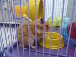Título do anúncio: Gaiola e Hamster