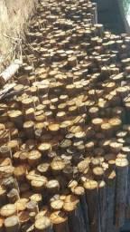 Lenha de eucalipto 6 reais saco 13 kilos.