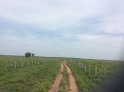 Fazenda em Juína MT. Confira a Oportunidade de Investimento