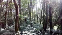 Chacará Curralinho de cima, São Jose dos Pinhais