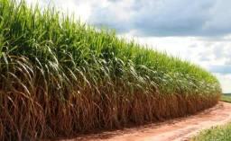 Fazenda de 250 alqueires, região de Presidente Prudente, X imóvel em SP