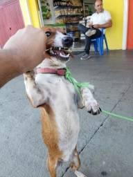 Doação de cachorro filhote 4 meses (linguicinha)