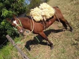 Cavalo de procedência