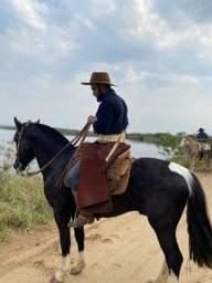 Cavalo tubiano