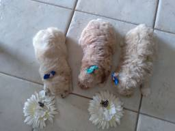 Título do anúncio: Filhotes puro poodle 0
