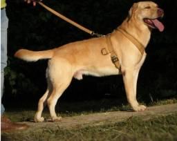 Título do anúncio: Peitoral reforçado para cães