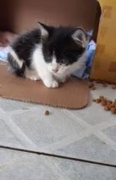 Título do anúncio: Doação gato (feminha)