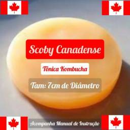 Muda canadense - Vinda do Canadá