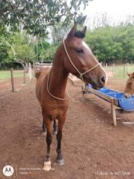 Título do anúncio: Cavalo mestiço Crioulo