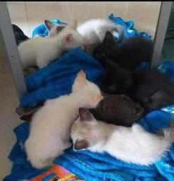 Título do anúncio: Lindos gatinhos para doação.