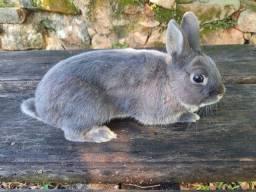 Título do anúncio: Vende se coelhos de raça mini