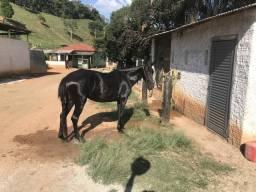 Egua preta , marcha picada