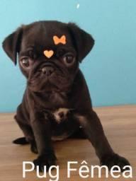 Pug Black,  super promoção de Páscoa