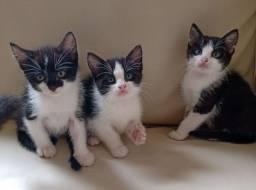 Título do anúncio: Doa se gatinhos
