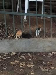 Título do anúncio: Flhotes de gatinhos para doação