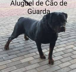Título do anúncio: CÃO DE GUARDA FERROLHO