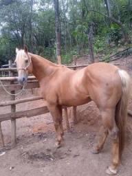 Título do anúncio: Vendo cavalo pura quarto de milha