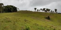 Fazenda de Gado em Apuarema / BA 170 Hectares