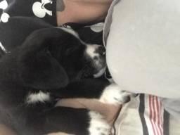 Cachorrinho para doação