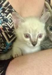 Doação gatinha / FÊMEA