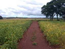 Fazenda de Terra Roxa 100 alqueires na divisa com Rio Goioêre