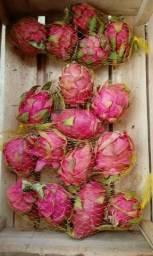 Pitaya poupa Vermelha e poupa Branca