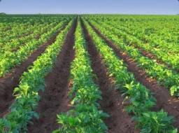 Planos Para Investimento Rural