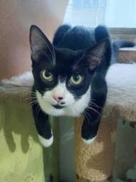 Título do anúncio: Gatinha com 6 meses para adoção