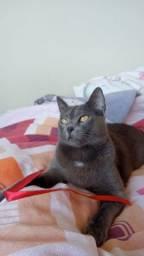 Título do anúncio: Doação responsável de gatos