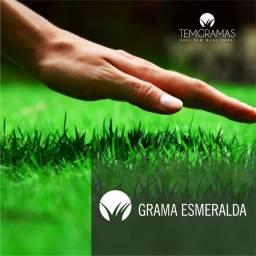 Título do anúncio: grama para jardim