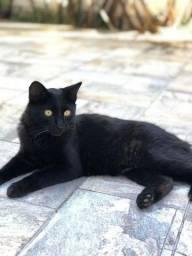 Título do anúncio: Doa- se Gato