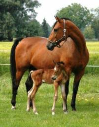 Alugo pasto para cavalo