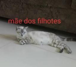 Doação filhotes de gato