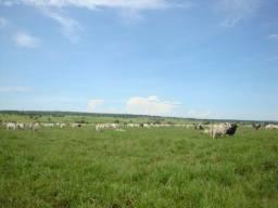 Fazenda 110 alqueires região P. Prudente SP