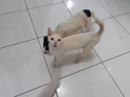 Doa_se filhotes de gatos