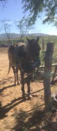 Vendo ou troco Cavalo de esteira