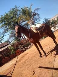 Vendo esse cavalo Ou faço rolo com algo do meu interece
