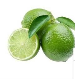 Mudas de limão rosa, taiti, Siciliano e galego