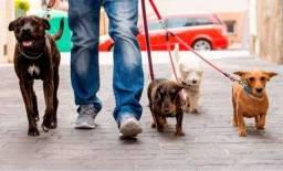 Título do anúncio: Passeadora de Cães