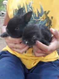 Título do anúncio: Filhote de coelhos