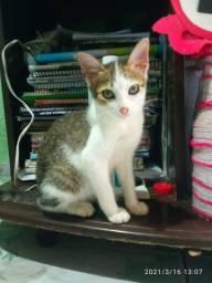 Gatinhos de 3 meses para adoção
