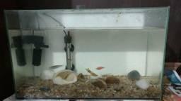 Vende se aquário completo