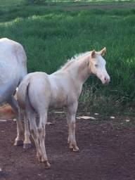 Título do anúncio: Cavalo Égua Potro Potra de laço em dupla laço cabeça laço pé, coberturas, tambor e redea