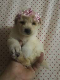 Poodle mini toy