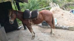 Título do anúncio: Vendo cavalo crioulo