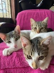 Título do anúncio: Gatos de um ano de vida pra doação