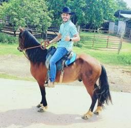 Cavalo MM Macha picada