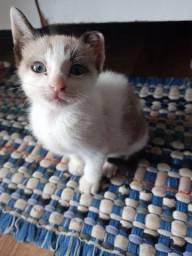 Título do anúncio: Doa- se um gatinho