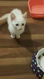 Título do anúncio: Doação gatinho macho tem 45 dias